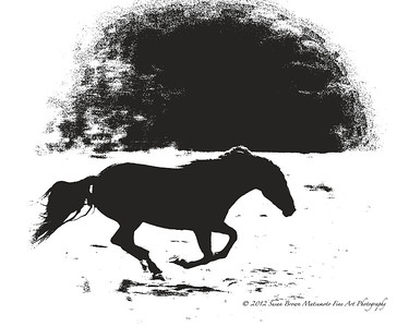"""Thunder In The Valley"" By Susan Brown Matsumoto Fine Art & Photography Return To Freedom American Wild Horse Sanctuary"
