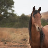 "© 2012 ""Maya"" Sulphur Springs Mare, Daughter of Chief<br /> Return To Freedom American Wild Horse Sanctuary<br />  <a href=""http://www.returntofreedom.org"">http://www.returntofreedom.org</a>"