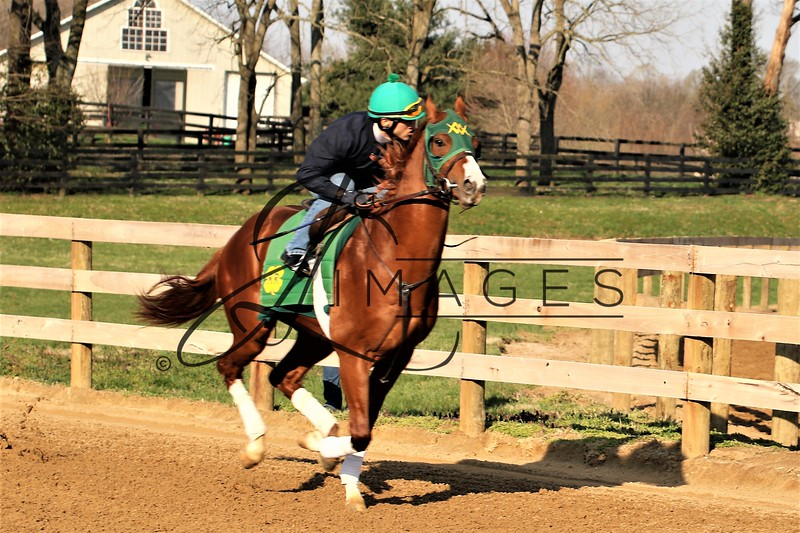 The Thoroughbred Center