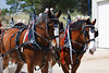 horses; draft; clydesdales; carriage; cart; team