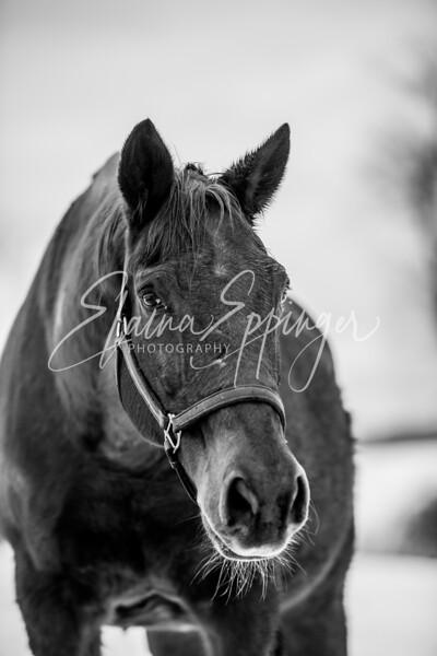 Winter 2018 Horses