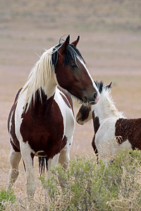 """Mare and Foal"""