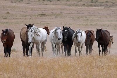 """""""Wild West"""""""