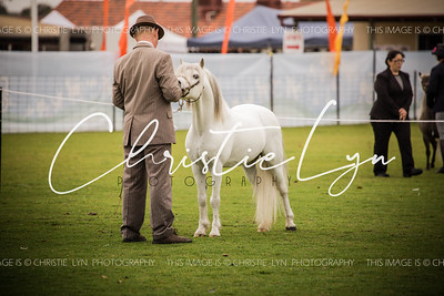 Waroona Ag Show 8th October 2016: Breed Classes