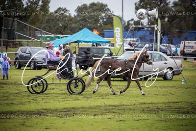 Waroona Ag Show 8th October 2016: Harness Classes