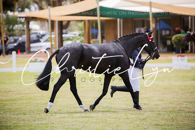 Standardbred Off The Track Finals 29th October 2016