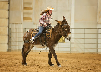 2016 Colorado Classic Mule and Donkey Days