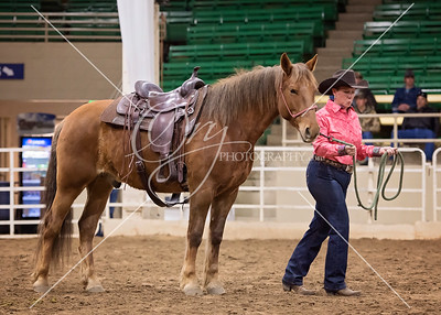 2018 Colorado Mustang Days- Pleasure/Cow Class