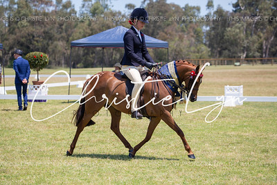 2019-2020 Equine Events