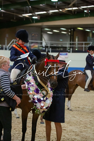 Class 13: Child's Large Show Pony over 13 hh up to inc 14 hh
