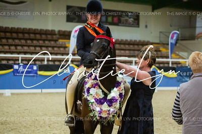 Class 16: Child's Small Show Galloway over 14 hh up to inc 14.2