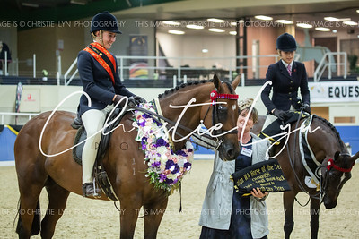 Class 18: Child's Small Show Hack over 15 hh up to inc 16 hh