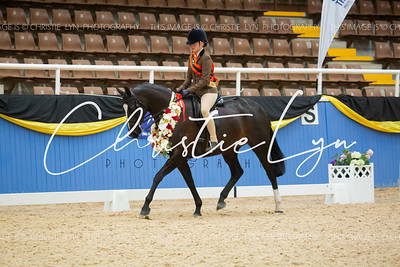 Class 6: Child's Small Show Hunter over 15 hh up to inc 16 hh
