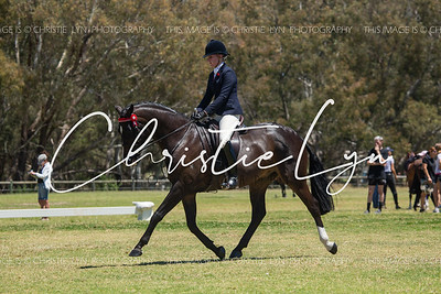 SHCWA Horse of The Year: Sunday 27th October only