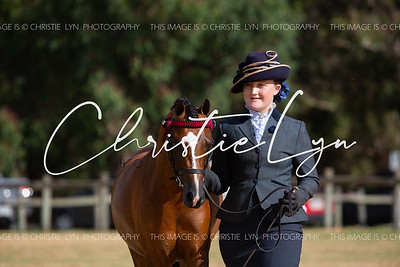 Welsh and Part Welsh Youngstock Showcase incorporating Working Hunter and ARC Ridden Championship