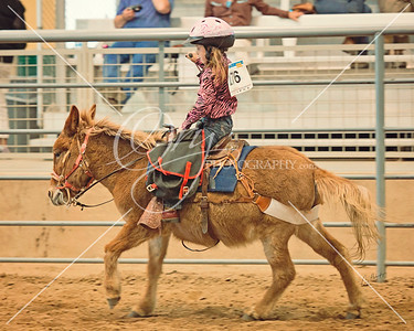 Colorado Classic Mule and Donkey Days