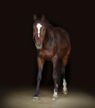SaddleSeeksHorse