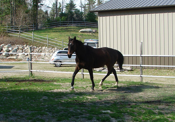Equine Images