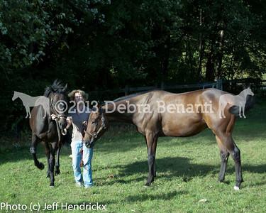 harvard_horses-28