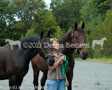 harvard_horses-20