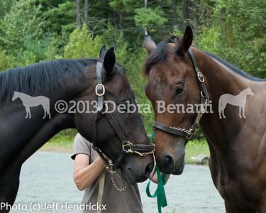 harvard_horses-23