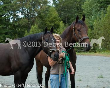 harvard_horses-19