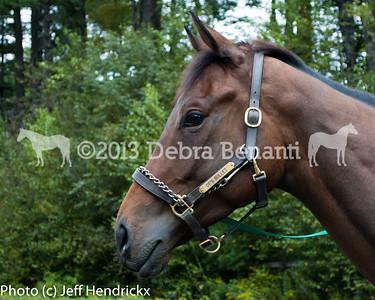 harvard_horses-12