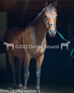 harvard_horses-1
