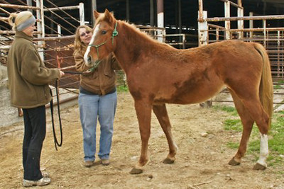 """Lizzie"" - After December 6, 2009 Going to Her NEW HOME!!"