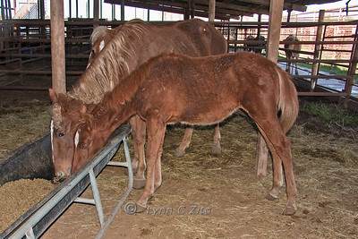 """Mom & Filly"" - Before November 4, 2009"