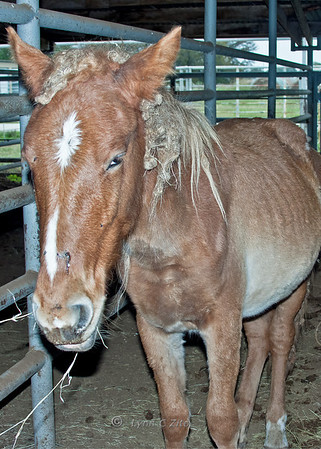 #5 Crimanally Cute & Ready To Please Colt - He Was Adopted!