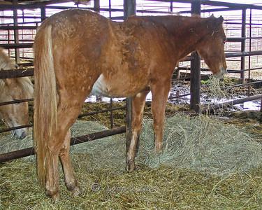 Vincent - After December 31, 2009