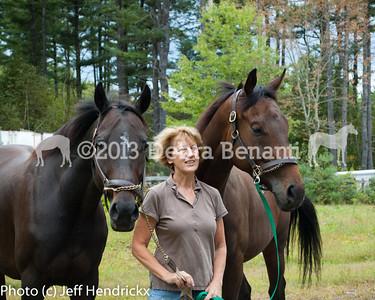 harvard_horses-18