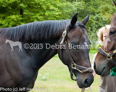 harvard_horses-16