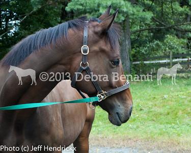 harvard_horses-25