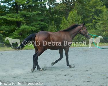 harvard_horses-10