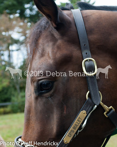harvard_horses-26