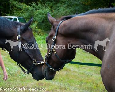 harvard_horses-13