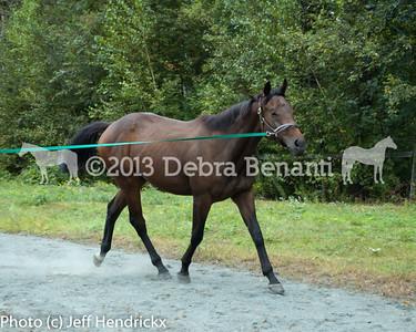 harvard_horses-8