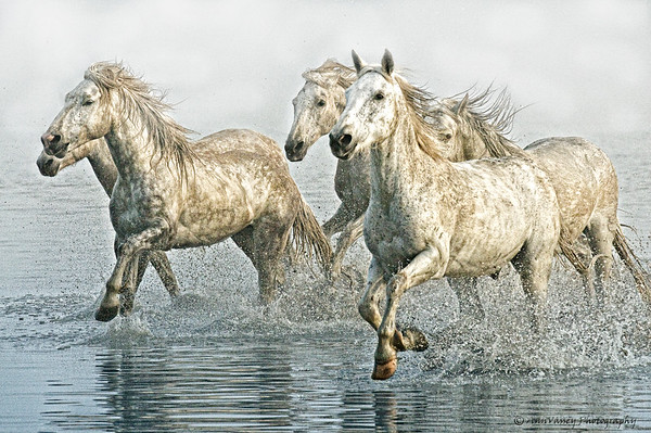 Flying Manes