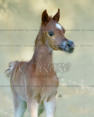 Firenze Foals-1556 fin