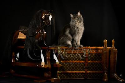 Cats TF-6496 fin