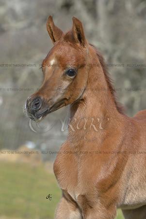 Marissa baby-4716 fin