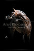 Equine Proofs : 45 galleries with 1272 photos