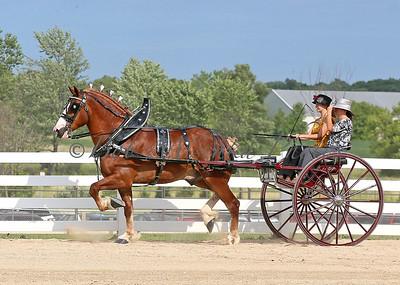 #5 Belg Cart_0265