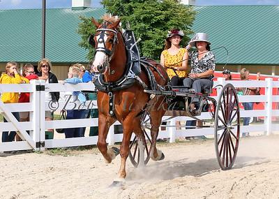 #5 Belg Cart_0156