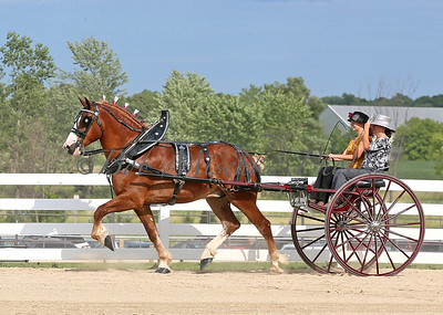#5 Belg Cart_0266