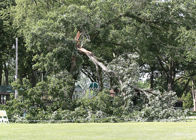 Aa Tree Down_1095