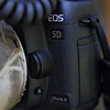 Canon 5D Mark II<br /> Full frame sensor<br /> 21 MP <br /> <br /> Tonji:<br /> <br /> This is my favorite camera. We used to use Nikon film cameras and had 3 Nikon digital SLRs before switching to Canon. The other Canon cameras I have owned recently are the 50D and the 7D. I prefer this camera to those models.<br /> <br /> In my opinion the main strength of this camera is the sensor.  It uses the same sensor as the top of the line 1Dsmk3 which presently costs $8,750.00. The 5dMk2 costs 1/4 the price.  I like the image quality of my captures with this camera. It produces very clean files. I find that to be a big advantage early in the morning or late in the day when the light is weak and difficult. The great low light performance is a big plus under a thick forest canopy. I don't worry about ISO 2500.  The large 21 MP file size is a big advantage. Paired with the clean files the high resolution allows me to crop and retain a lot of details without a lot of noise. When I zoom into a perfectly focused photo, the details just get better and better.  Did I say I like the sensor? <br /> <br />  I find the AF works very well. Its not as high tech as the 7D AF. But I have taken some very decent BIFs with this camera. On center point AF, which is the only mode I use for birds, its just as good as the 7D in terms of speed of AF. But on the other AF mode it can't compete with the 7D. <br /> <br /> The battery lasts a long time, usually a day and a half to two days. There is no need to use a battery grip which will only add to the weight. I carry more than enough gear already. Less weight please!<br /> <br /> What I don't like is the slow frame rate of 3.9 per second. But it is not usually something that bothers me.<br /> <br /> We have recently upgraded to the 5D Mk3. It answers all the weaknesses of the 5Dmk 2.  Advanced AF, better weather sealing, and 6 fps shooting. If the sensor of the new model really is 2 stops better than the 5D Mk2. The Mk2 is a good camera. The Mk3 i