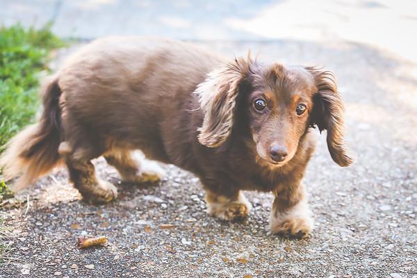 Miha Photo  Pets